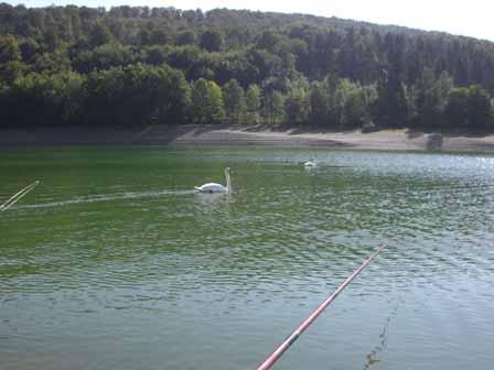 Diemelsee zwanen en vishengel
