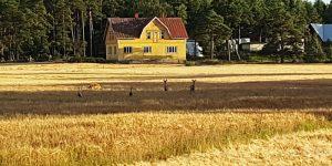 Finland herten